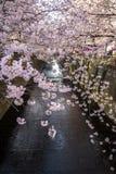 Tokio, Japón en el canal de Meguro en la estación de primavera Fotos de archivo libres de regalías