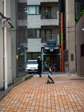 TOKIO, JAPONIA CZERWIEC 28, 2017 -: Niezidentyfikowany kobiety odprowadzenie przy tradycyjnymi tylnej ulicy barami w Shinjuku Zło Zdjęcia Royalty Free