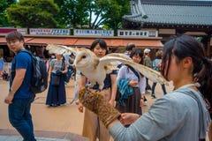 TOKIO, JAPONIA CZERWIEC 28, 2017 -: Piękna sowa pozuje nad kobieta nadgarstkiem w ulicie w Akihabara sowy kawiarni - sowy są bard Zdjęcia Royalty Free