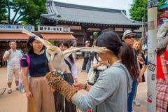 TOKIO, JAPONIA CZERWIEC 28, 2017 -: Piękna sowa pozuje nad kobieta nadgarstkiem w ulicie w Akihabara sowy kawiarni - sowy są bard Obrazy Stock