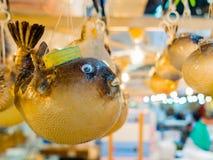 TOKIO, JAPONIA CZERWIEC 28, 2017 -: Zakończenie up suchy blowfish obwieszenie w Tsukiji rynku, jest dużym hurtowym ryba i Obraz Stock