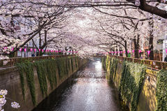 Tokio, Japonia przy Meguro kanałem w wiosna sezonie Obrazy Royalty Free