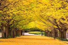 Tokio Japonia w jesieni Zdjęcie Stock