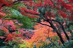 Tokio momiji Zdjęcie Stock