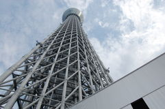 Tokio nieba drzewo, Tokio Obrazy Stock