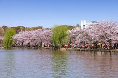 Tokyo royalty-vrije stock afbeelding