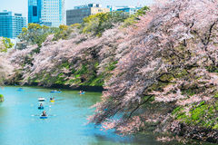 TOKYO - APRIL 7  People celebrating the cherry blossom at Chidorika-Fuji in Tokyo on April 7 2014  The cherry blossom season known Royalty Free Stock Photo