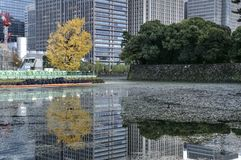 Tokyo - autumn in center, Japan