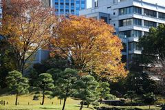 Tokyo autumn Royalty Free Stock Photography