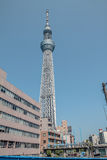 Tokyo-Baumhimmel Stockbilder