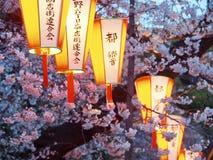 Tokyo Cherry Blossoms e lanterne immagini stock