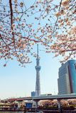 Tokyo Skytree tower in Japan with cherry blossoms Stock Images
