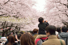 Tokyo Crowd enjoying Cherry Blossoms Royalty Free Stock Photography