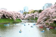 Tokyo, Giappone - 4 aprile: Una gente non identificata si rilassa in ciliegia Fotografie Stock Libere da Diritti