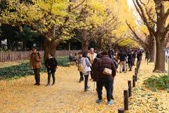 Tokyo höstlövverk Arkivfoton