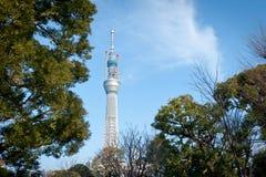 Tokyo-Himmel-Baum Stockfotos