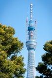 Tokyo-Himmel-Baum Stockfotografie