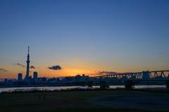 Tokyo-Himmel-Baum an der Dämmerung Stockbild