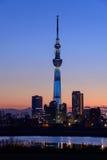 Tokyo-Himmel-Baum an der Dämmerung Stockfotografie