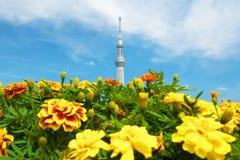 Tokyo-Himmelbaum und -ringelblumen Lizenzfreies Stockbild