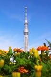 Tokyo-Himmelbaum und -ringelblumen Lizenzfreie Stockbilder