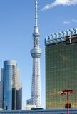 Tokyo himmelträd Fotografering för Bildbyråer