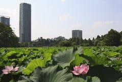 Tokyo horisont från imperialistisk slott Arkivfoton