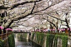 Tokyo Japan - April 10, 2017: Körsbärsröd blomning eller Sakura på Megur Arkivbild
