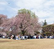 Landscape of Shinjuku Gyoen National Garden. Japan royalty free stock photos