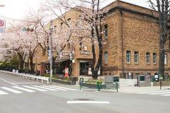 TOKYO JAPAN - APRIL 1ST, 2016: Cherry Blossoms träd på gatan Arkivfoton