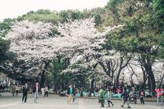 TOKYO JAPAN - APRIL 1ST, 2016: Den Tokyo folkmassan som tycker om festival för körsbärsröda blomningar i Ueno, parkerar Arkivbild