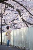 People enjoy hanami in Japan. Tokyo, Japan - 2019 April 5th stock photos