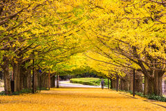 Tokyo Japan in Autumn Stock Photo