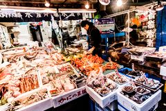 Tokyo, Japan - January 15, 2010: Early morning in Tsukiji Fish Market. Worker laying out fresh fish and seafood on the counter royalty free stock photography