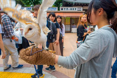 TOKYO, JAPAN JUNE 28 - 2017: Beautiful owl posing over a woman wrist in the street in Akihabara owl cafe - owls are very. Popular pets in Japan royalty free stock photo