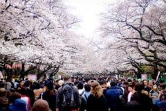 TOKYO, JAPAN - MAART 30: De bezoekers genieten van Japanse kersenbloesem bij Ueno-Park Het Uenopark is de beroemdste plaats van T Stock Foto