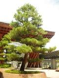 Tokyo japan nature scenery Stock Images