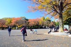 Tokyo Japan - November 22, 2013: Besökare tycker om färgrika träd Arkivbilder
