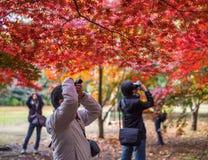 TOKYO, JAPAN - November, 30, 2014: Japanese tourists taking pict Royalty Free Stock Photo