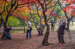 TOKYO, JAPAN - November, 30, 2014: Japanese tourists taking pict Stock Photo