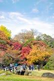 TOKYO JAPAN - NOVEMBER 20, 2016 Koishikawa Korakuen graden, jaen Arkivbild