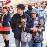 TOKYO, JAPAN - OCTOBER 31, 2017: Mature couple with dogs on a ci stock photography