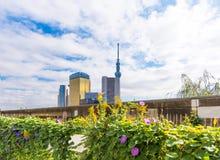TOKYO, JAPAN - 31. OKTOBER 2017: Eine Ansicht des Asahi-Turmgebäude und Fernsehturm ` der himmlische Baum von Tokyo-` Kopieren Si lizenzfreie stockfotos