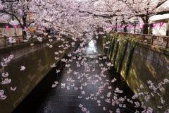 Tokyo Japan på säsongen för Meguro kanal på våren Arkivfoton
