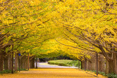 Tokyo Japan Park Royalty Free Stock Photography