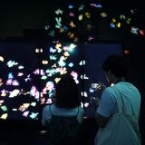 Guy and girl are watching how butterflies fly. Tokyo / Japan - Sept 12 2018: mori digital art museum, Odaiba. Guy and girl watched on as butterflies fly on the royalty free stock photography