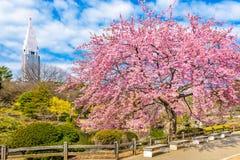 Tokyo, Japan Spring Garden stock photography