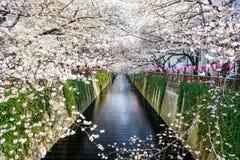 Tokyo, Japan Springtime Canal Stock Image