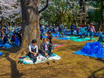 Tokyo, Japon - 24 août 2017 : Foule des personnes appréciant le festival de fleurs de cerisier en parc d'Ueno Images libres de droits