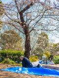 Tokyo, Japon - 24 août 2017 : Foule des personnes appréciant le festival de fleurs de cerisier en parc d'Ueno Photo stock